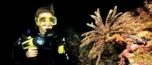 Night-Diver