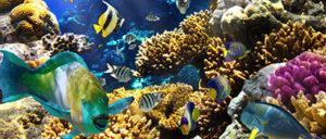 Underwater-Naturalist