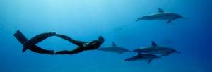 slider-etap-b-freediver